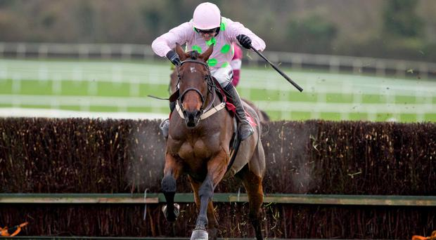 Going for gold: Djakadam should win at Cheltenham today ahead of Gold Cup glory bid