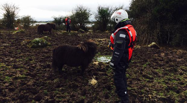 Teams from the Community Rescue Service bring food to the stranded horses on Lough Beg yesterday