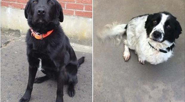 Two of the dogs which helped police and HMRC bust a fuel smuggling operation. Pic PSNI