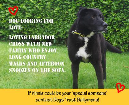 Vinnie has so far been overlooked and is looking for love.