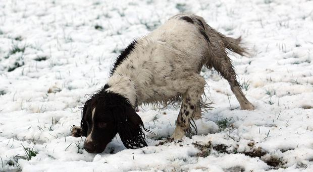 Picture by Freddie Parkinson/Press Eye © In Wallace Park, Lisburn, Ralph enjoys looking for his ball.
