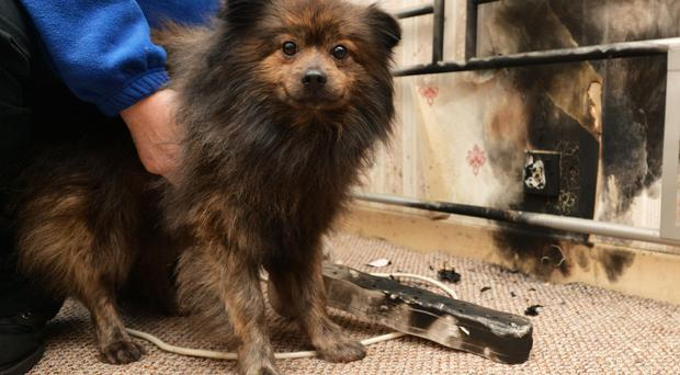 PACEMAKER BELFAST 02/03/2016 Gizmo is a hero after he alerted a family to safety after a house fire. Two adults and six children have escaped serious injury after a fire at a house on the Falls Road in west Belfast. Photo Colm Lenaghan/Pacemaker Press