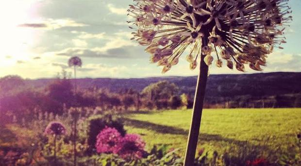 Laura Elliott's photograph taken in her family's garden in Country Fermanagh