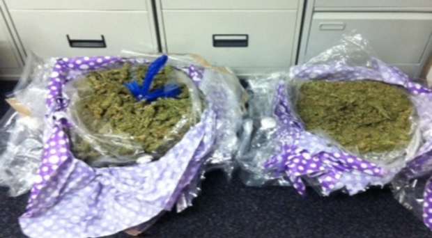 The suspected cannabis.