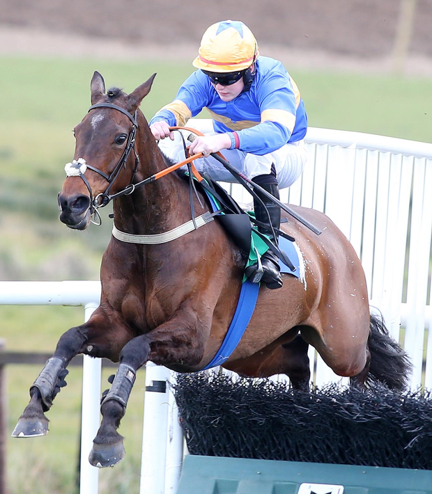 Midnight express: Midnight Theatre, with Luke Dempsey in the saddle, on the way to winning the Supporting Irish Injured Jockeys Fund EBF Mares Maiden Hurdle at Downpatrick yesterday