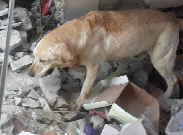 Dayko the Labrador retriever, was four-years-old (Cuerpo De Bomberos Ibarra Ibarra/Facebook)