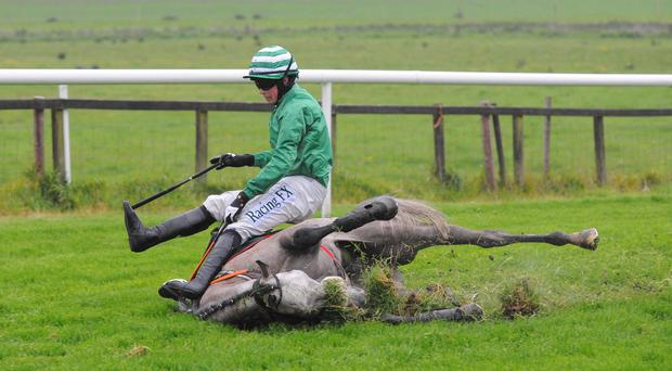 Hard game: Ainslie and jockey Bryan Cooper were both unhurt after falling at the final flight in the Silversea and Etihad Airways Maiden Hurdle at Downpatrick last night