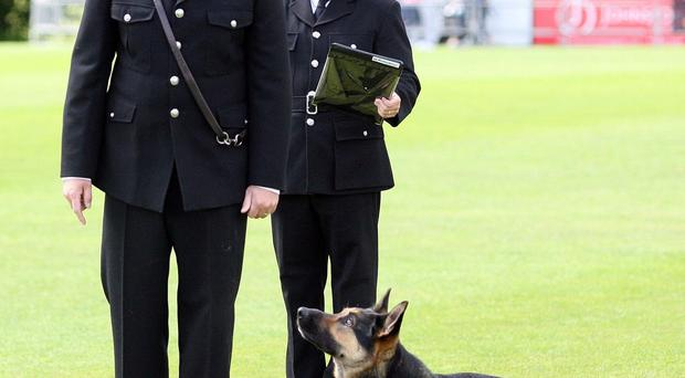 56th National Police Dog Trials on Sunday at Stormont Pavillion. Picture by Freddie Parkinson/Press Eye