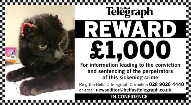 We are putting up a £1,000 reward for help in tracking down the culprits - and punishing them for their callous actions