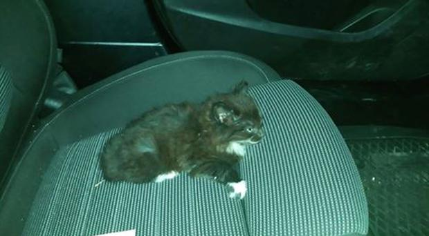 This is one of the kittens thrown from the moving car in Armagh.