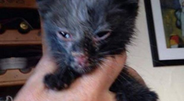 The kitten was found covered in soot and with minor injuries to his nose