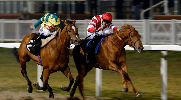 Fancied: Manjaam is being tipped to do the business at Down Royal in Saturday's Magners Ulster Derby