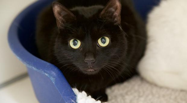 Cats Protections Belfast Adoption Centre is desperately appealing for owners to adopt one of the many cats in the charitys care this summer.