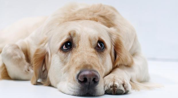 Dog owners have been urged to wash their dogs after a walk. [File photo]