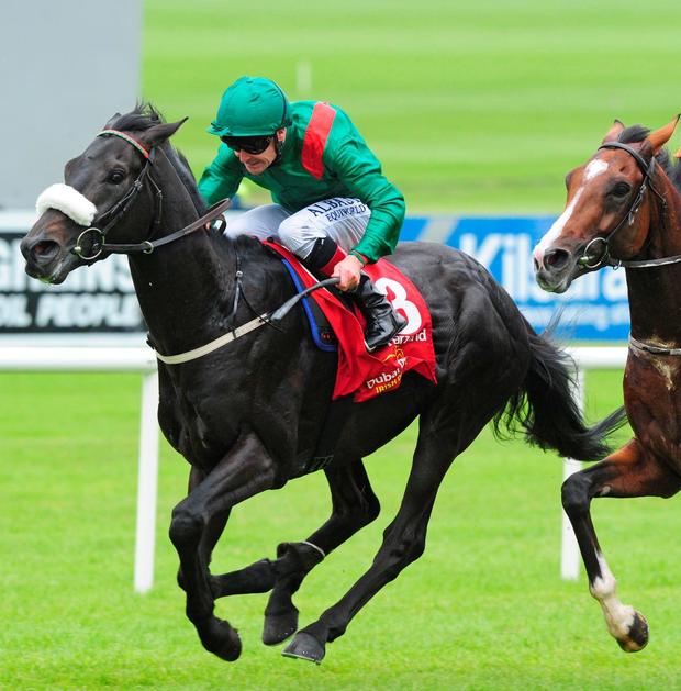 Derby delight: Harzand, Pat Smullen in the saddle, races to victory in the Dubai Duty Free Irish Derby at the Curragh