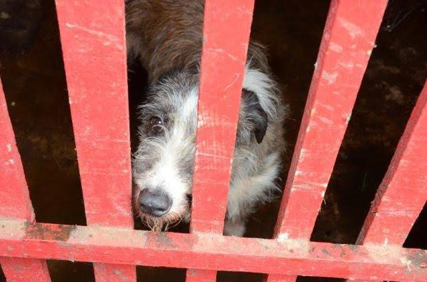 Dog rescused at house in Old Holywood Road, Belfast