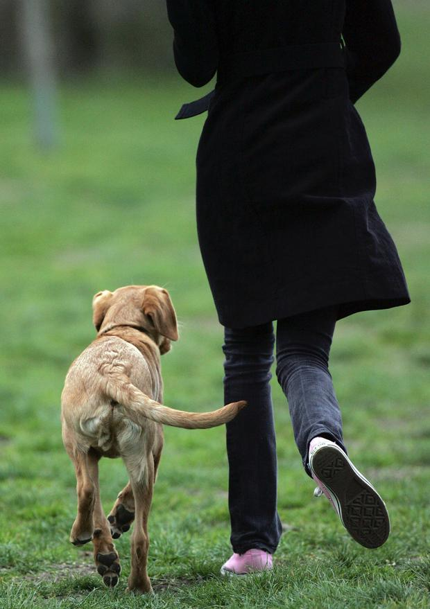 Pet owners face a new crackdown on dog fouling
