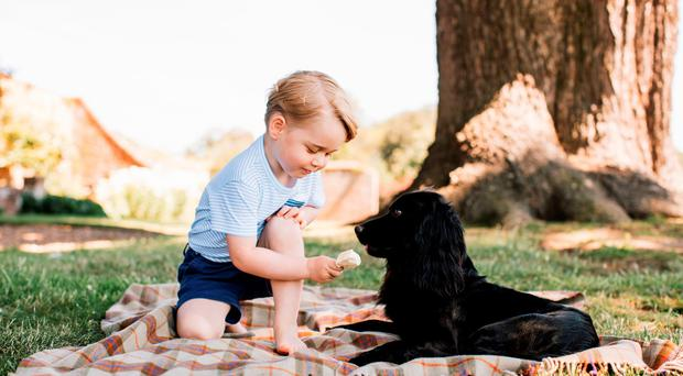 Photo released by the Duke and Duchess of Cambridge of Prince George, who celebrates his third birthday today with the family pet, Lupo. The photograph was taken at their Norfolk home in mid-July by Matt Porteous. Photo: Matt Porteous/PA Wire