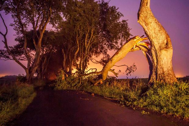 A fallen tree has blocked the road in the early hours of Wednesday morning. The famous tourist attraction and popular Game of Thrones filming location has been battered before with two trees falling durning storm Gertrude. PIC MATT STEELE/MCAULEY MULTIMEDIA