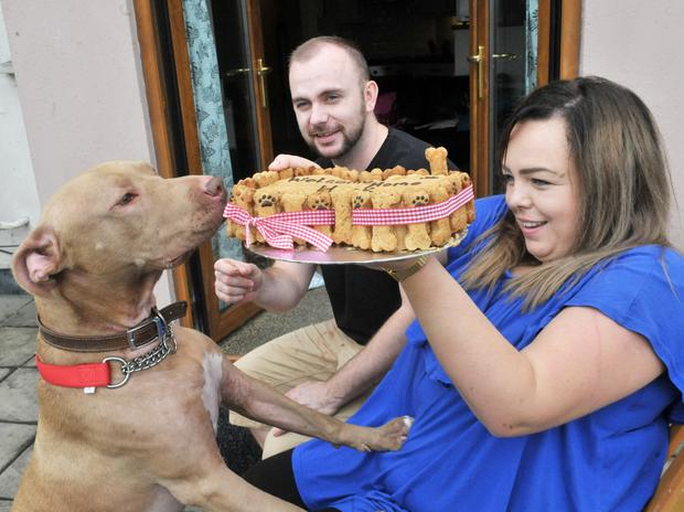 Hank is home and a special 'doggie cake' was there to welcome him from owners Joanne Meadows Leonard Collins. Photo: Alan Lewis/PhotopressBelfast.co.uk