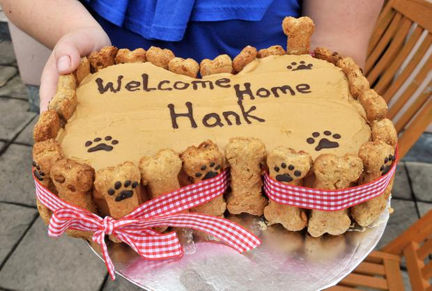 Hank is home and a special 'doggie cake' was there to welcome him from owners Joanne Meadows Leonard Collins. Image: Photopress Belfast