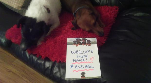 Jillian Bearns, Larne with Dixie & Dexter say welcome home to Hank