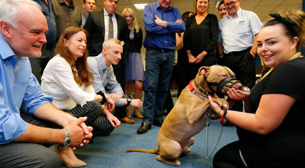 Hank the dog visited the Belfast Telegraph offices on Friday to say thanks to helping in the successful campaign to bring him home. (Photo by Kevin Scott / Belfast Telegraph)