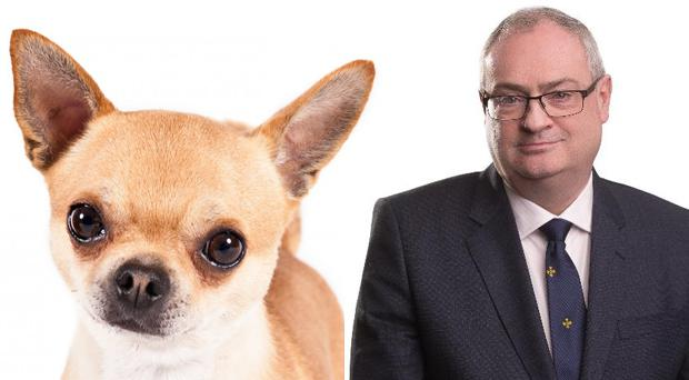 Steve Aiken described the animal as a 'small, intelligent and ferocious Mexican attack dog'.