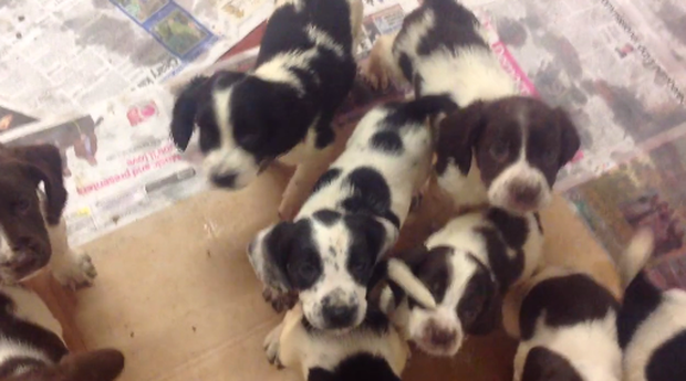 The puppies dumped in a box. Pic: USPCA