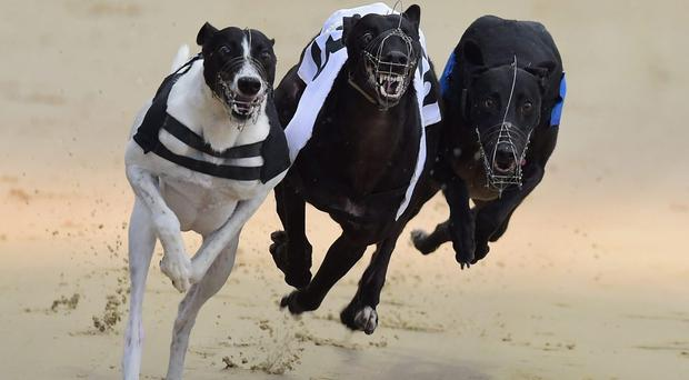 Brockagh Ciara reversed the form in no uncertain terms as she lifted £350 and the trophy in Drumbo's A3 final on Saturday night, taking her revenge on the odds-on favourite Beaming Dot Com (stock photo)