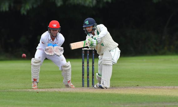 Keen eye: Ireland's John Anderson on his way to 59 against Hong Kong at Stormont yesterday