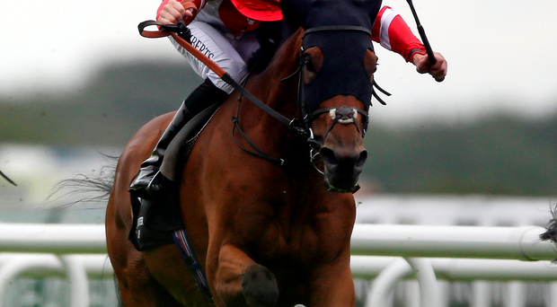 Whip hand: Ulster jockey Martin Harley powers Sheikhzayedroad to victory in yesterday's 250th Doncaster Cup