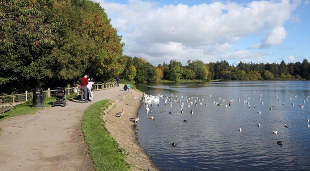 The popular Hillsborough forest park will benefit from the redevelopment