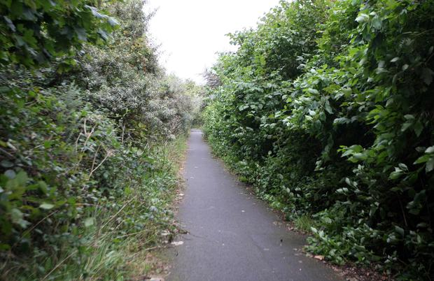 From left, the overgrown stretch of the cycle path that runs along the edge of Belfast Lough