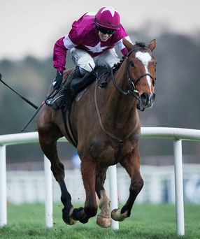 Class act: Don Poli is one of the fancied runners in the Down Royal Festival feature, the £140,000 JNWine.com Champion Chase, although regular jockey Bryan Cooper misses out through injury