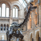 'Dippy' the Diplodocus is coming to the Ulster Museum in 2018.