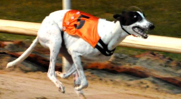 Missing greyhound Clares Rocket Pic: Imelda Grauer