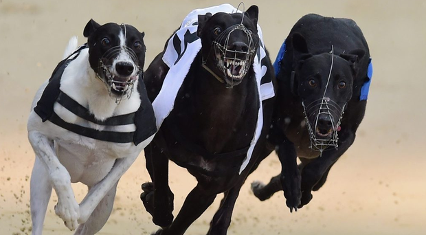 Yellowstone made it three wins on the bounce and clocked an impressive 17.92 at Drumbo on Saturday night (stock photo)