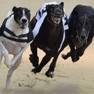 Top dog: Lissane Impact won the sprint final (stock photo)