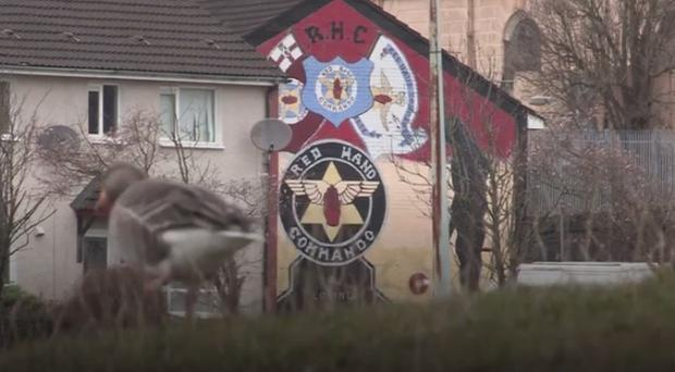 Geese in Belfast's Shankill estate. Pic BBC