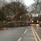 Tree down on the Glagorm Road toward Ahoghill. Pic @johnty128abmena
