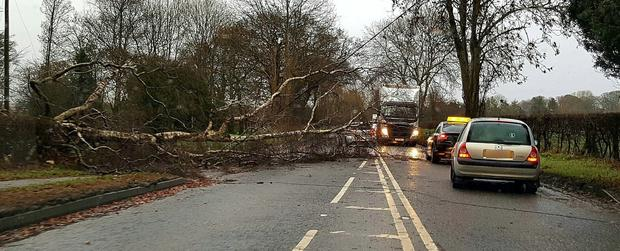 Tree down on the Galgorm Road toward Ahoghill. Pic @johnty128abmena