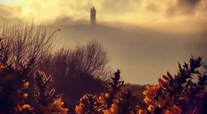 Scrabo, submitted by Kate Mairs, March 2017.