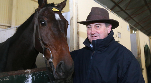 In the running: Monksland and Navan trainer Noel Meade. Photo: Lorraine O'Sullivan/INPHO