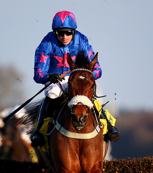 Seasoned campaigner: Cue Card is chasing Gold Cup win