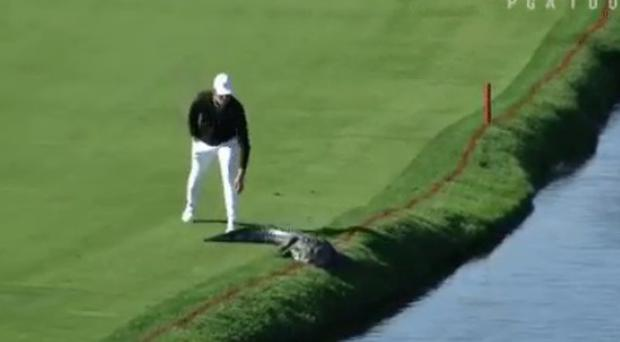 Cody Gribble as he approaches the alligator