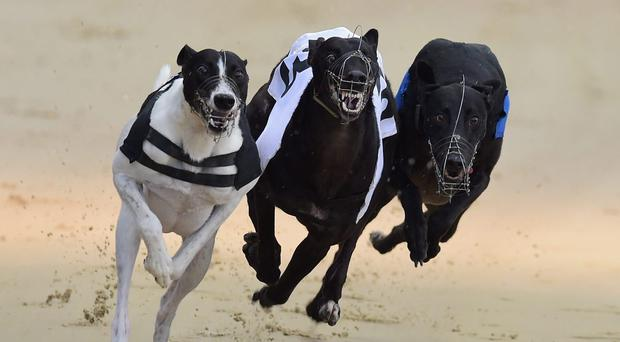 Talking Tactics spoke volumes with a scintillating performance in taking the £1400 Track Bookmakers & DTSC 525 final, clocking the fastest time of the year (28.48) at Drumbo Park on Saturday night. (stock photo)