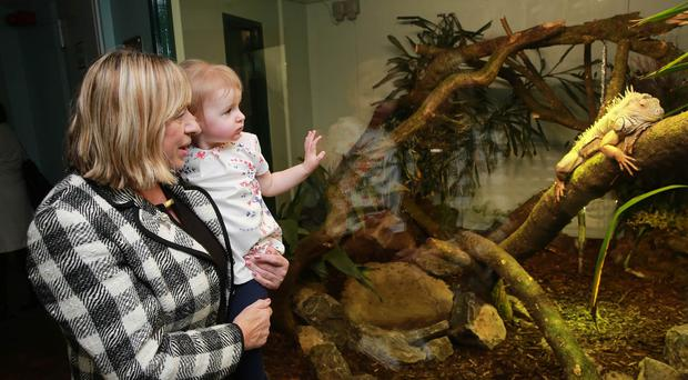 Belfast Zoo has opened its newly renovated reptile and amphibian house