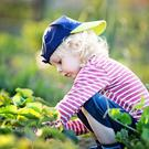 Fresh choice: a young child growing vegetables