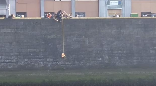 The drama unfolds .... as a cat is rescued from the River Liffey in Dublin. Picture Youtube